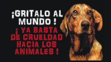 Basta de crueldad animal